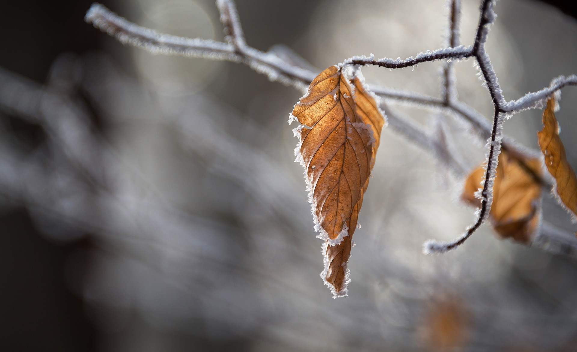 how to survive christmas fresh air and winter walks