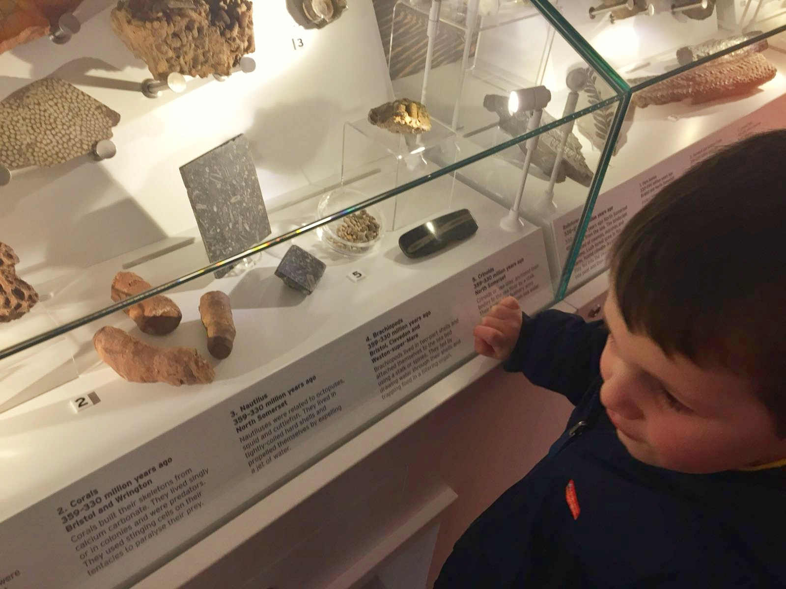 A Review of Weston Museum in Weston-super-Mare fossils