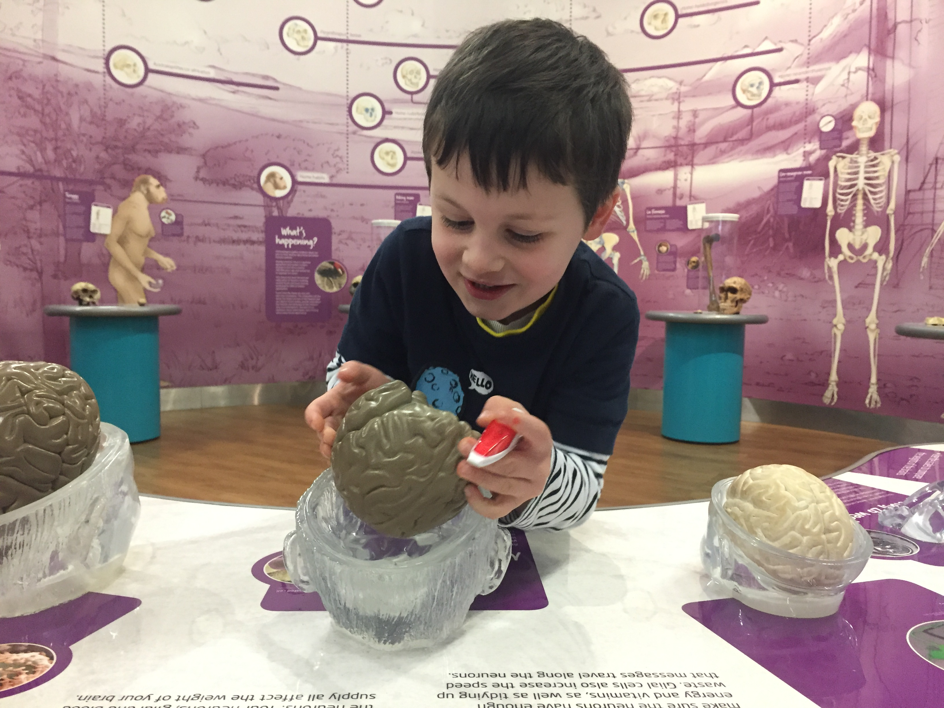 we the curious bristol science museum brain wieghts