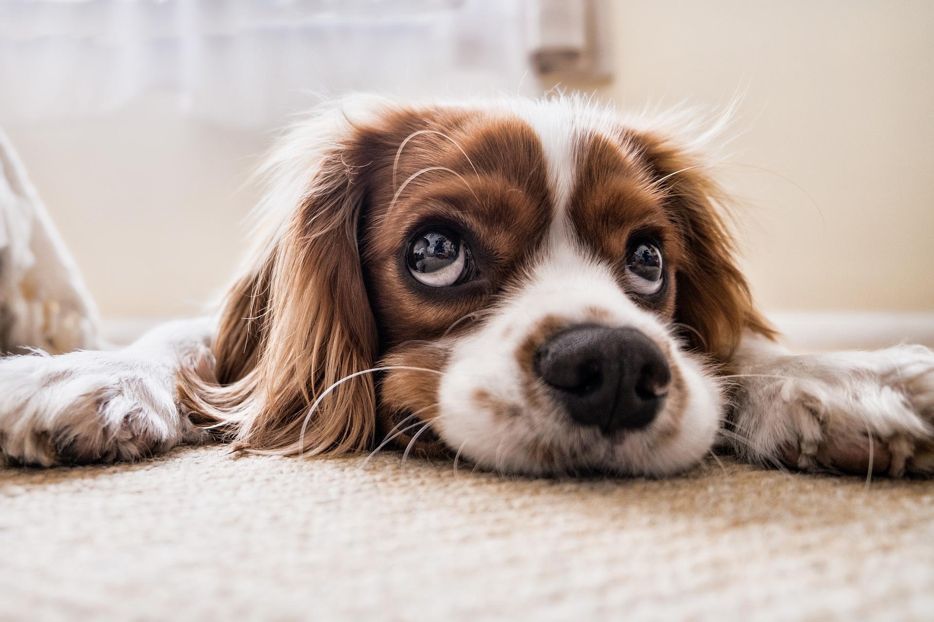 dog-napping-digital-detox